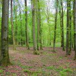 Begräbniswald Niederweiler Front